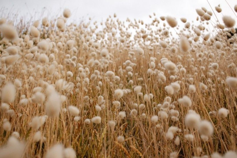 What makes our organic cotton bedding sustainable?
